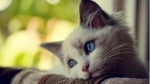 katten zijn geen vriend van een alarmsysteem