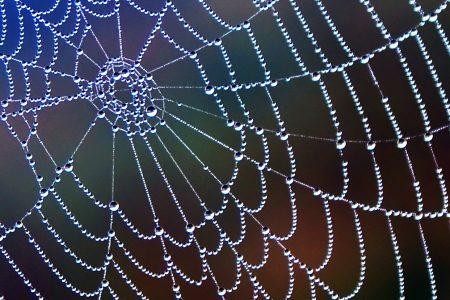 spinnenweb slecht voor camerabewaking